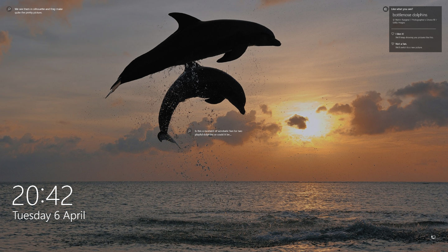 Bottlenose-dolphins-leaping-from-the-sea-near-Honduras