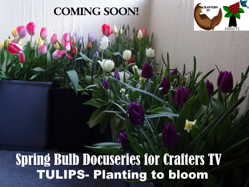 Spring-Bulb-Docuseries-for-CraftersTV-by-Crafters-TV-and-Anino-Ogunjobi